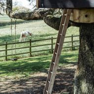 Ladder up to a treehouse