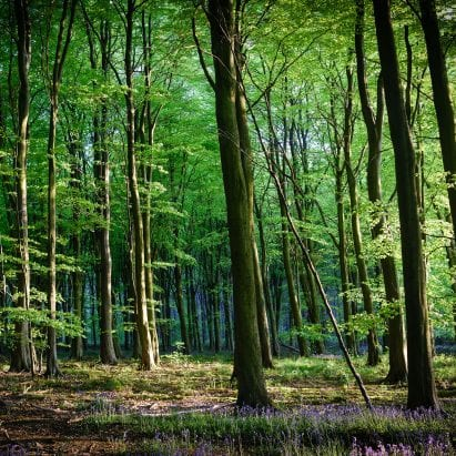 Woodland in the UK