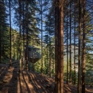 The cabins are located in a dense forest