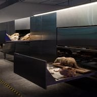 Israel puts skeletons and taxidermy on display at Venice Architecture Biennale
