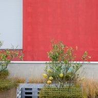Plants grow on the terrace