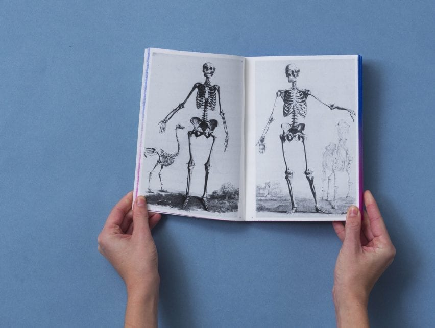 Two anatomical skeletons by scientist John Barclay