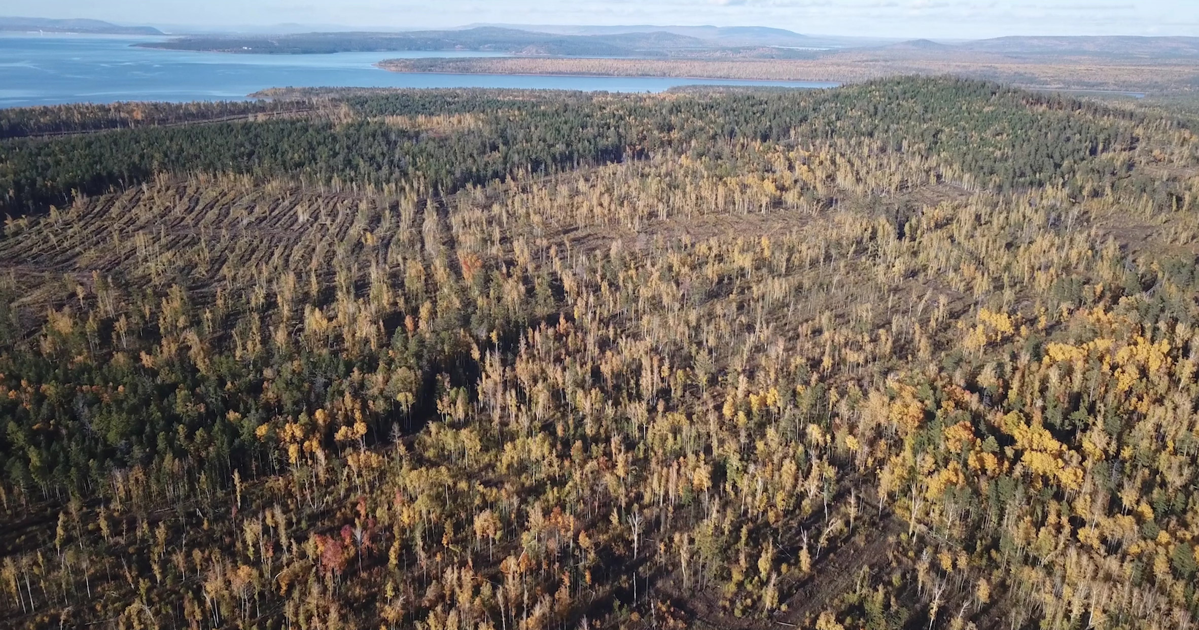 Aerial view of a Siberian forest