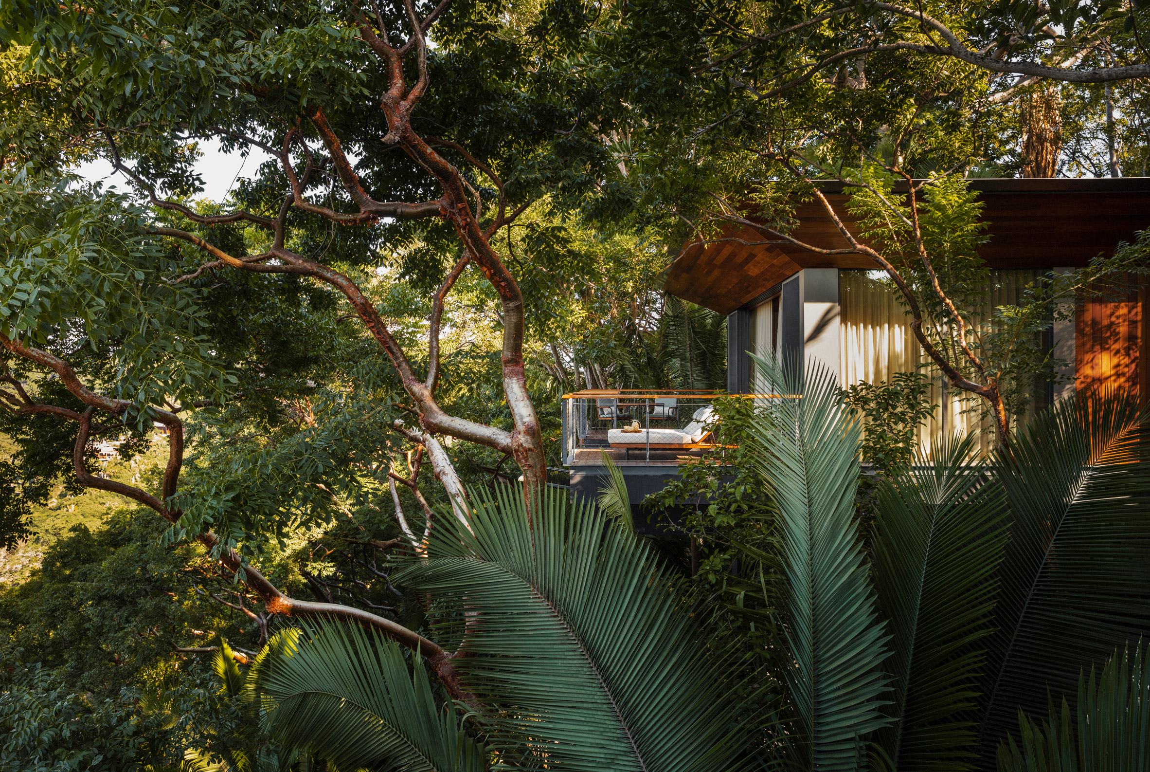 Treehouse suite among the rainforest foliage