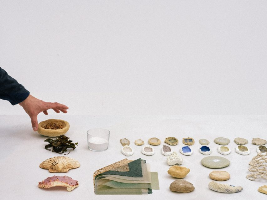 Different types of seashell
