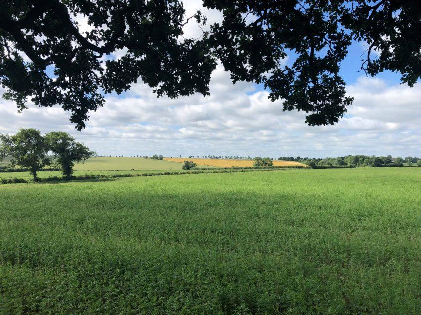 picture of a hemp field