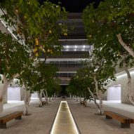 A tree-lined courtyard