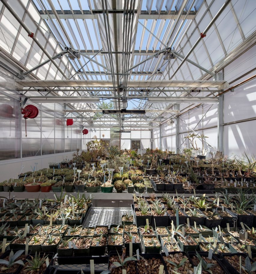 Plants thriving in the facility's greenhouse