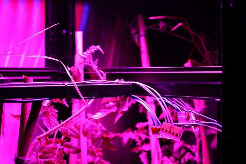Server powered using tomato plants by Ilja Schamle