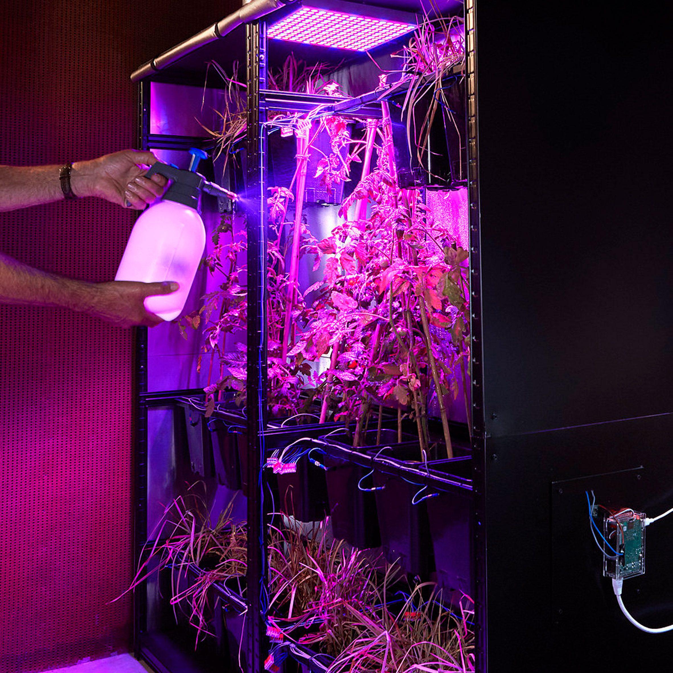 Ilja Schamle powers server with tomato plants in self-sustaining ecosystem