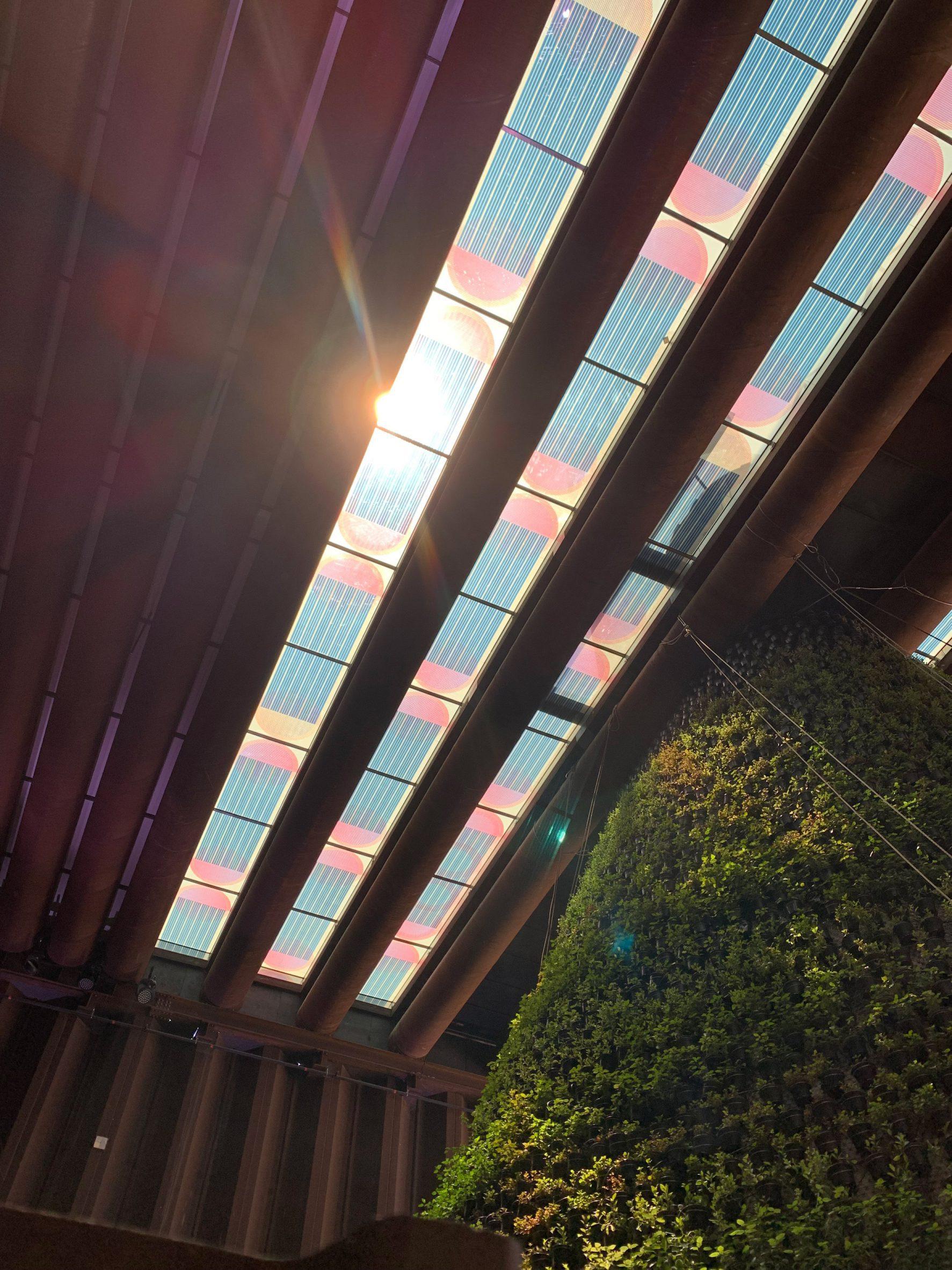 Coloured translucent solar panels forming a skylight above a vertical garden
